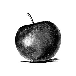 Baldwin Apple Clipart.