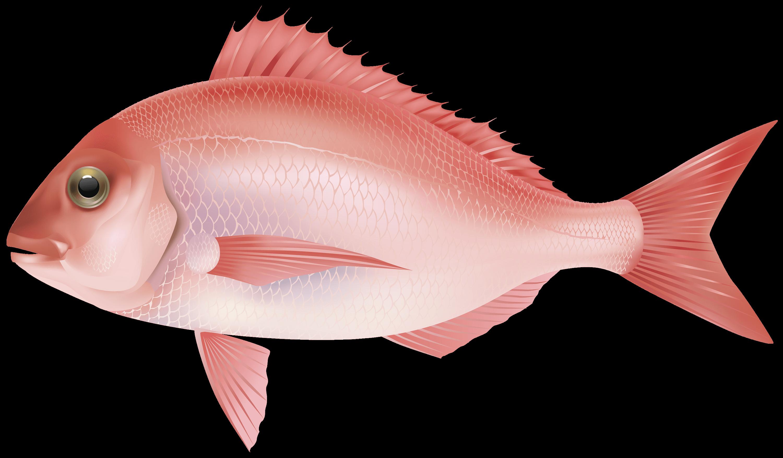 Poisson rose PNG transparents.