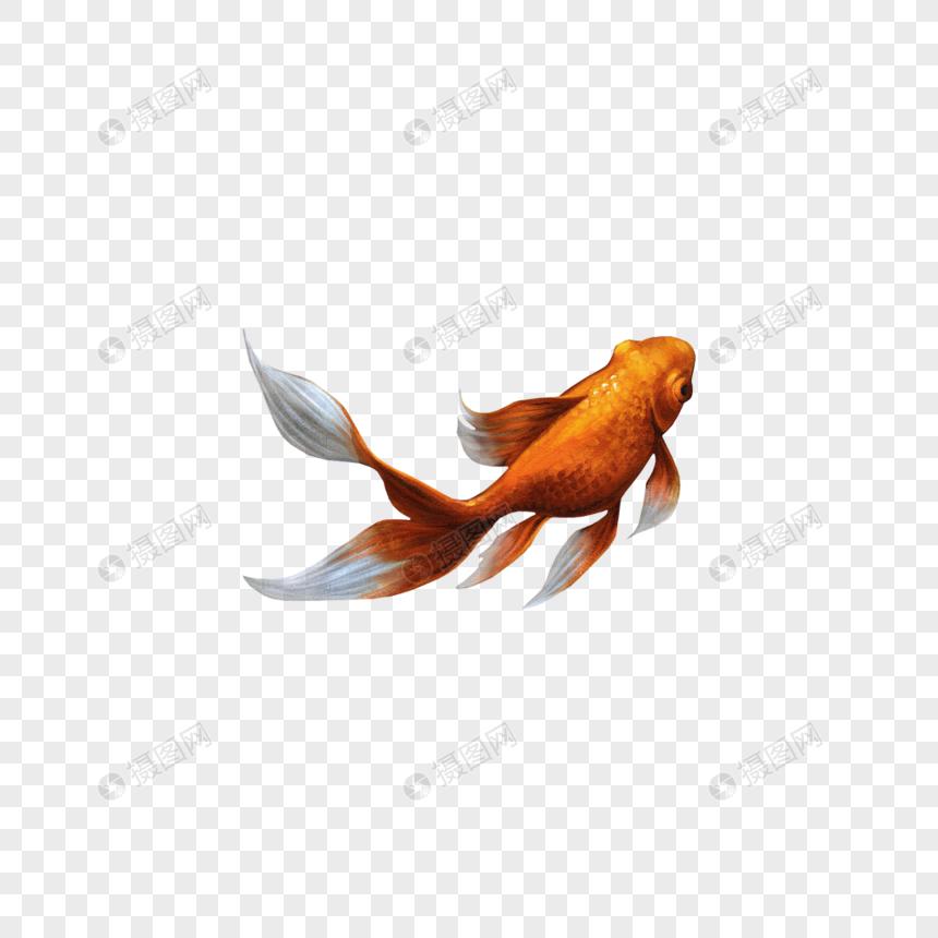 Photo de poisson rouge_Numéro de l\'image400913062_Format d.