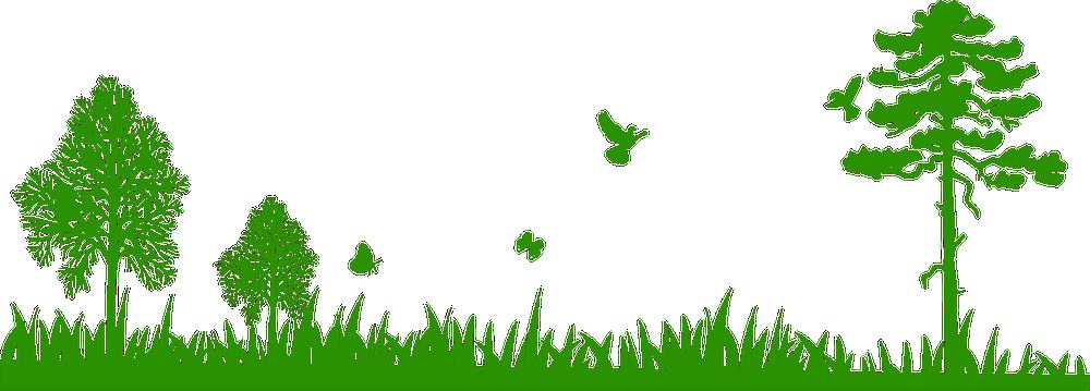 Pokok png 6 » PNG Image.