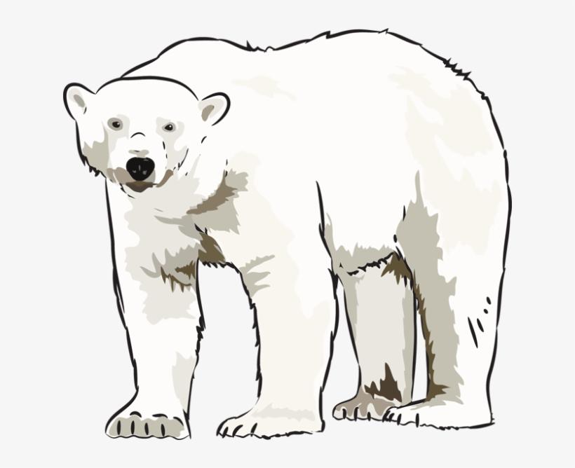 Art Polar Bear Clipart Kid.