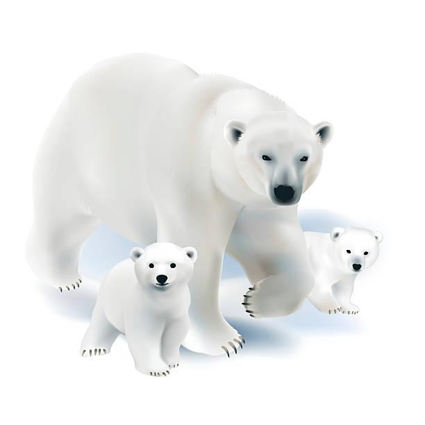 Polar Bear Cub Clipart.