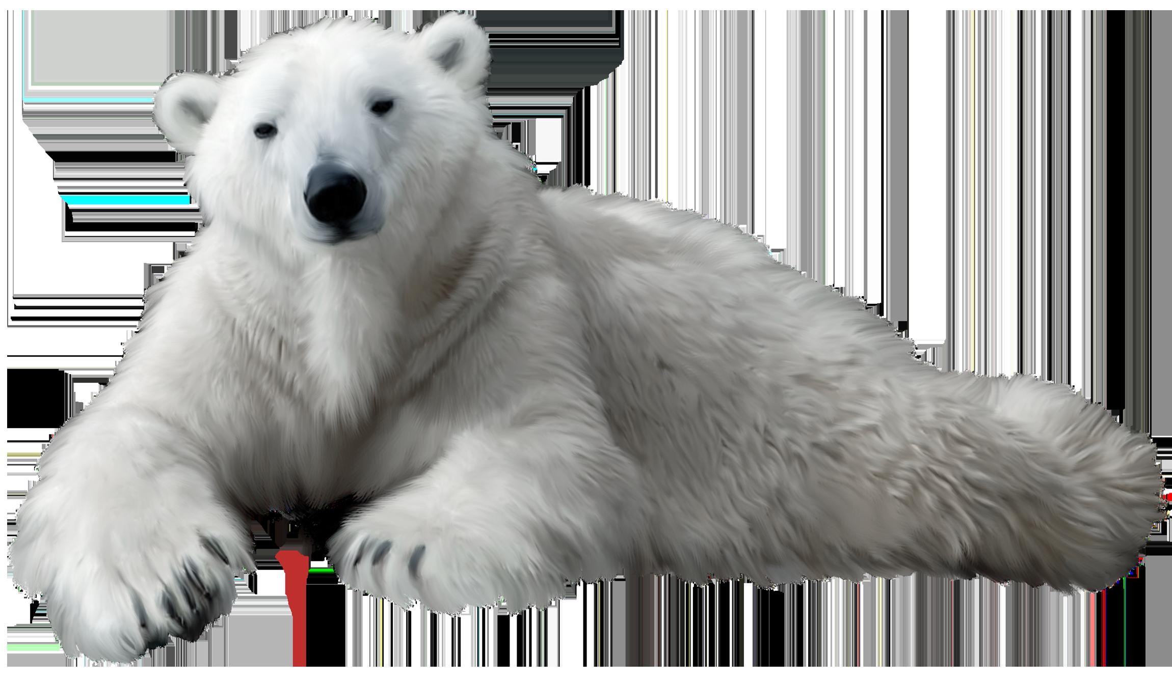 Polar Bear PNG Clip Art.