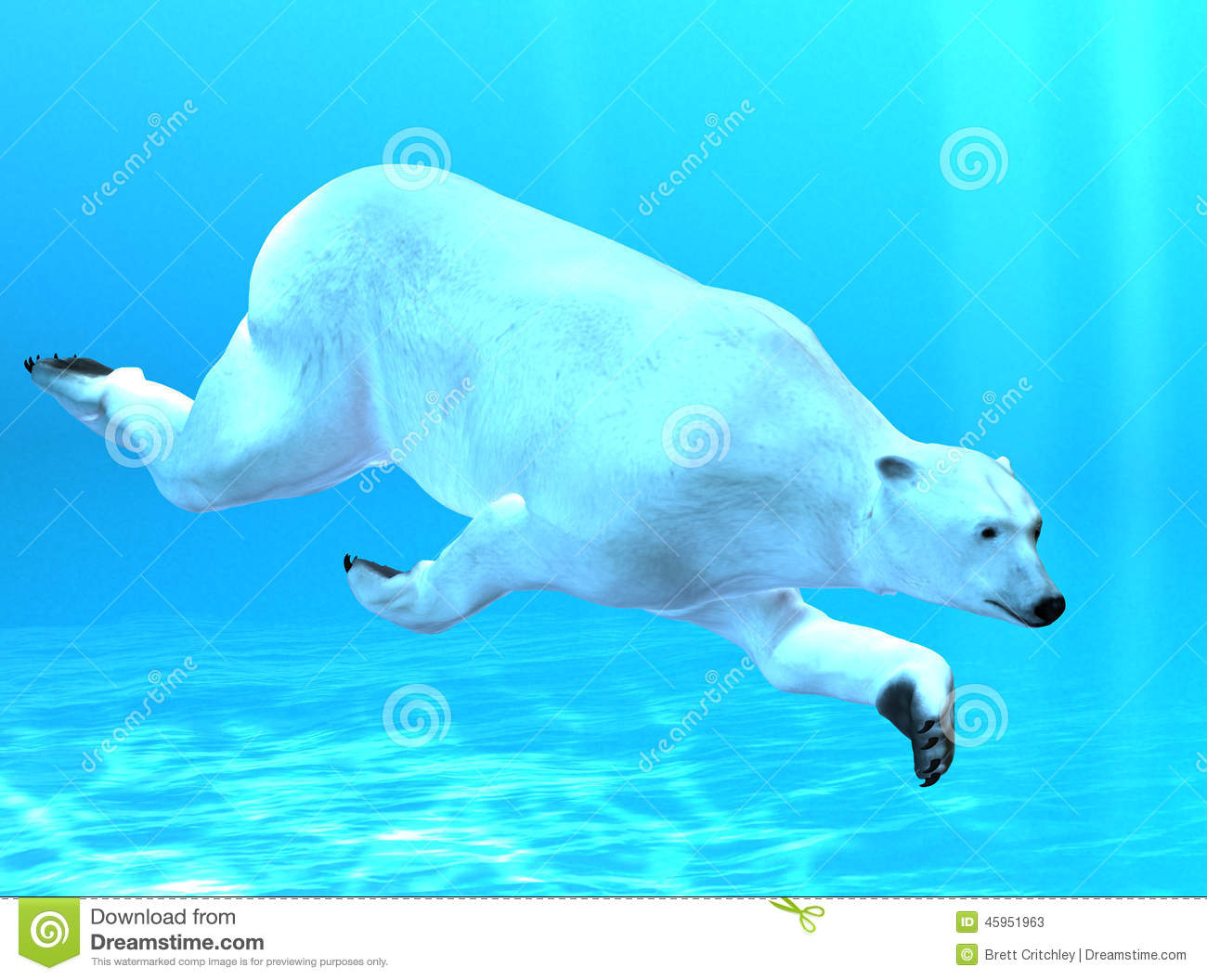 Swimming Polar Bear Clipart.