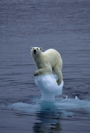 78+ ideas about Polar Ice Caps Melting on Pinterest.