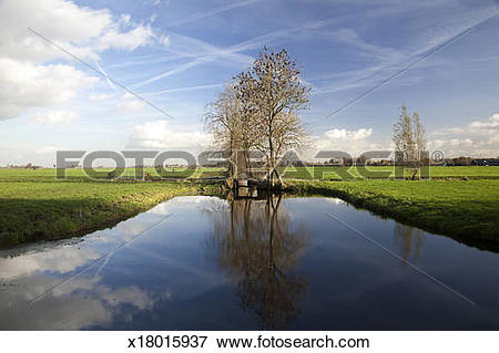 Picture of Dutch polder with wide ditch and trees x18015937.