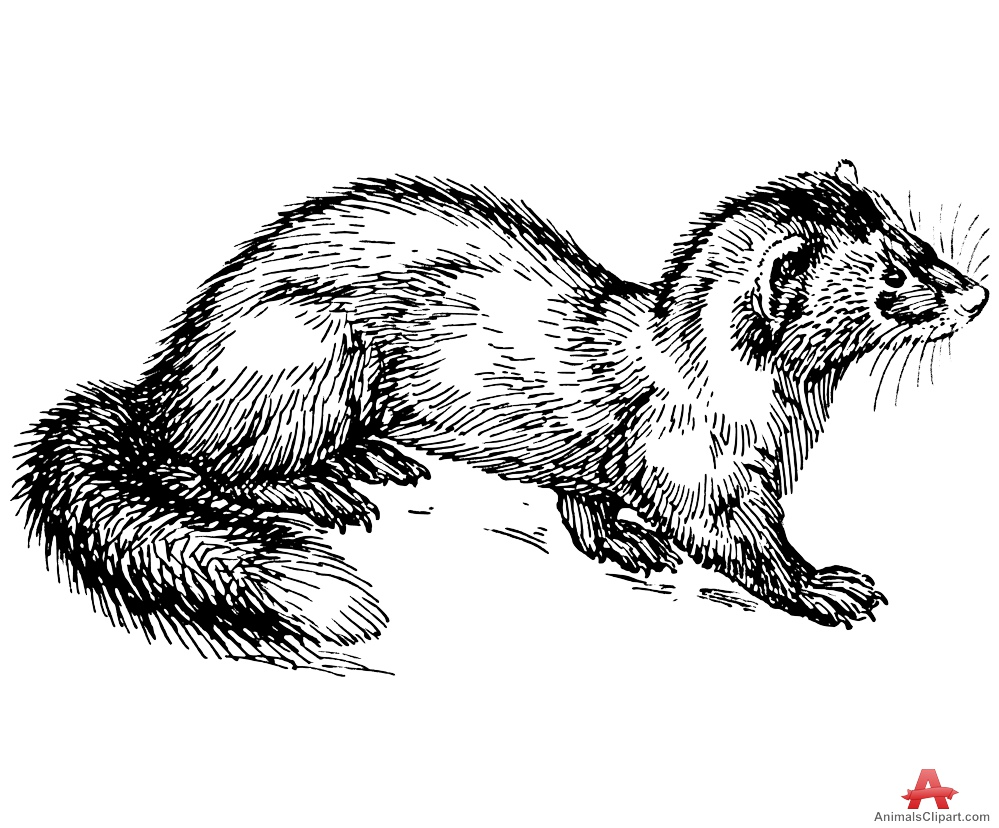 Polecat Clipart in Black and White.