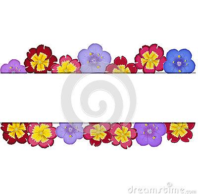 Blue Flower (greek Polemonium) Royalty Free Stock Image.