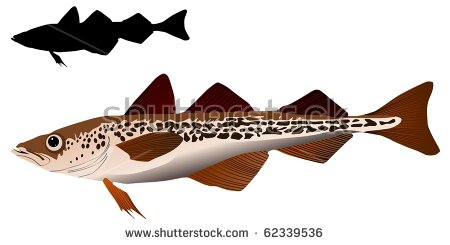 Pollock Fish Stock Photos, Royalty.