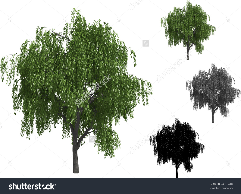 Vector Set Willow Trees Stock Vector 74810410.