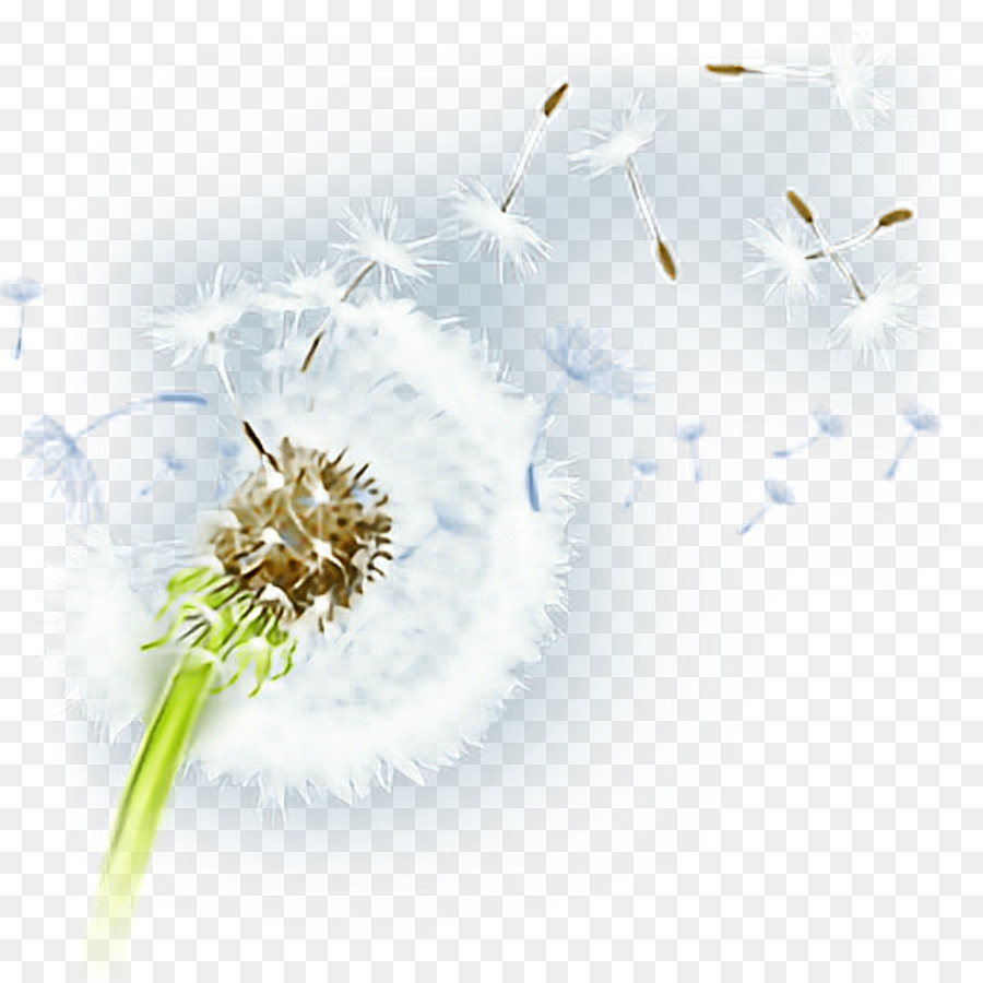 Flower Plant png download.