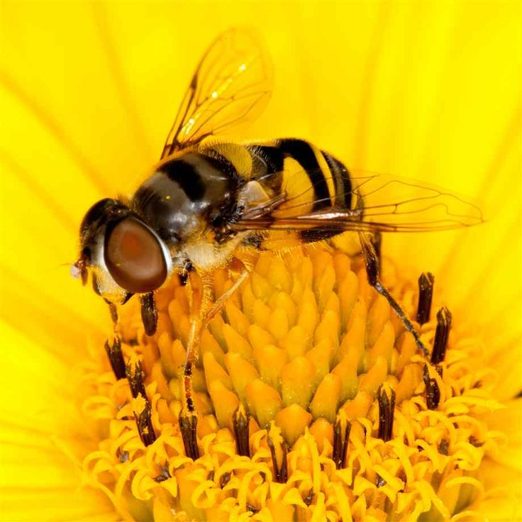 1000+ images about Bees Beautiful Bees on Pinterest.