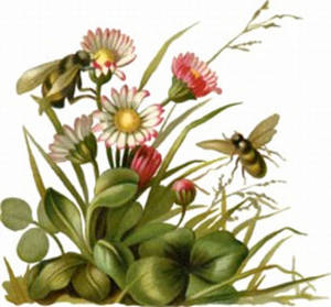 Clipart Picture of Bees Pollinating Daisies.