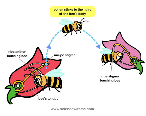 Bee pollinating flower clipart.