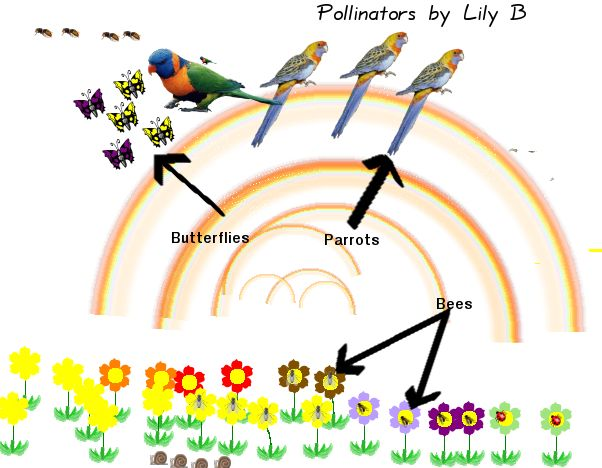 Similiar Pollination Diagram Keywords.