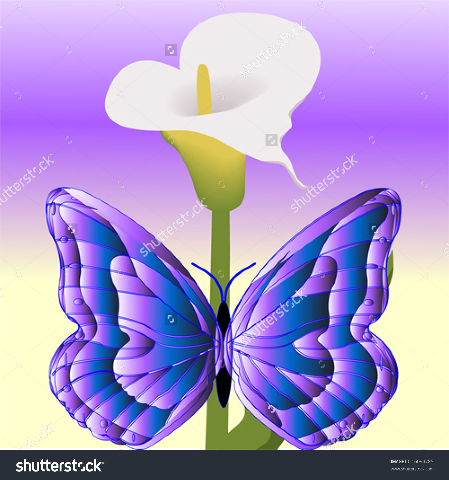 Vibrant Purple And Blue Butterfly On A Lily Vector.