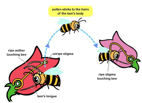 Pollination And It S Types Flower Home #PcpZhL.