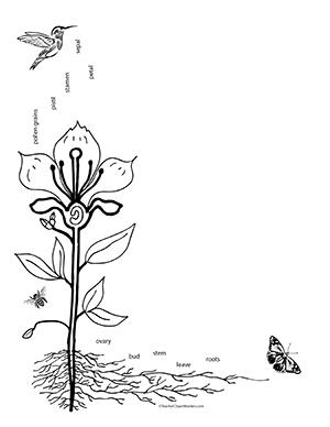 Pollinator Clipart.