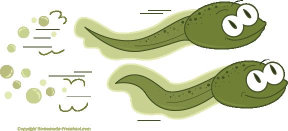 tadpole clipart clipground