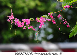 Polygonaceae Stock Photo Images. 232 polygonaceae royalty free.