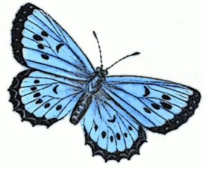 Butterfly 6 Clip Art Download.