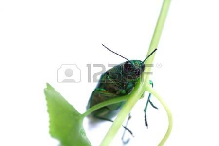 Polyphaga Stock Photos & Pictures. 161 Royalty Free Polyphaga.