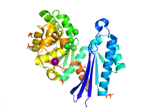 Exopolyphosphatase.