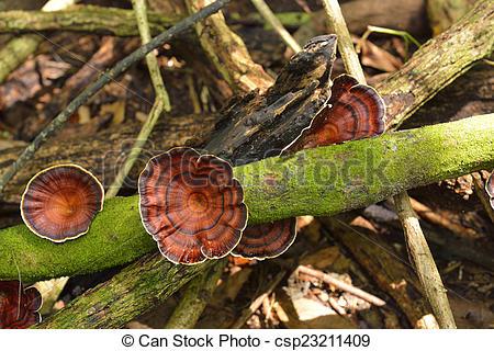 Stock de Fotografía de polyporaceae.