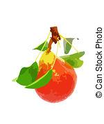 Pomaceous Illustrations and Stock Art. 18 Pomaceous illustration.