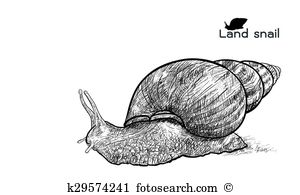Pomatia Clip Art Illustrations. 12 pomatia clipart EPS vector.