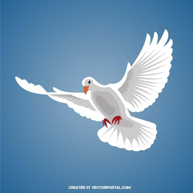WHITE DOVE IN FLIGHT.