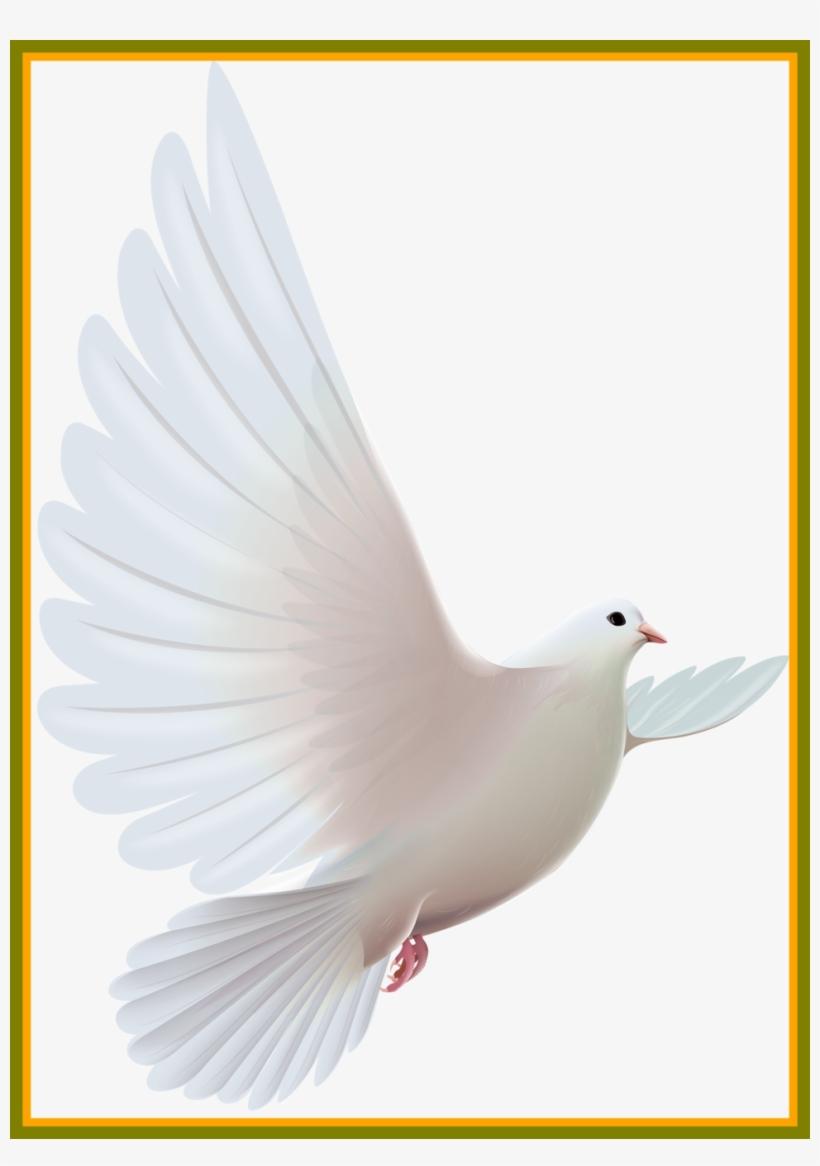 Pigeon Clipart Clip Art.