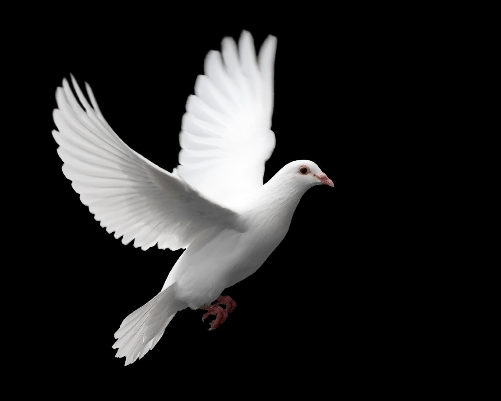 Quais são os símbolos do Espírito Santo?.