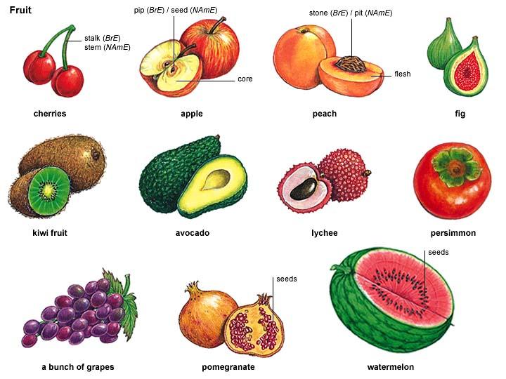 fruit_1 noun.