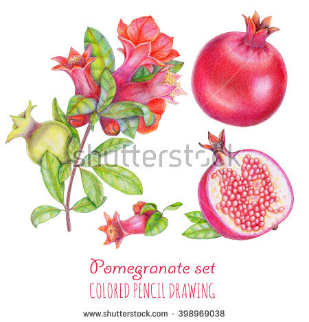 Pomegranate Blossom Stock Photos, Royalty.