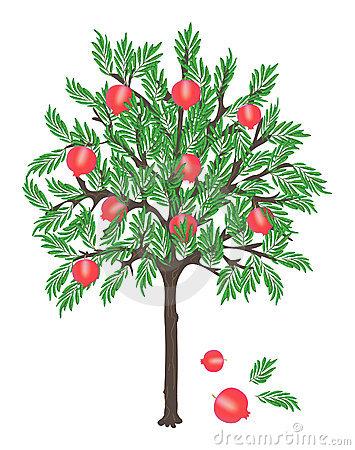 Pomegranate Tree Stock Illustrations.