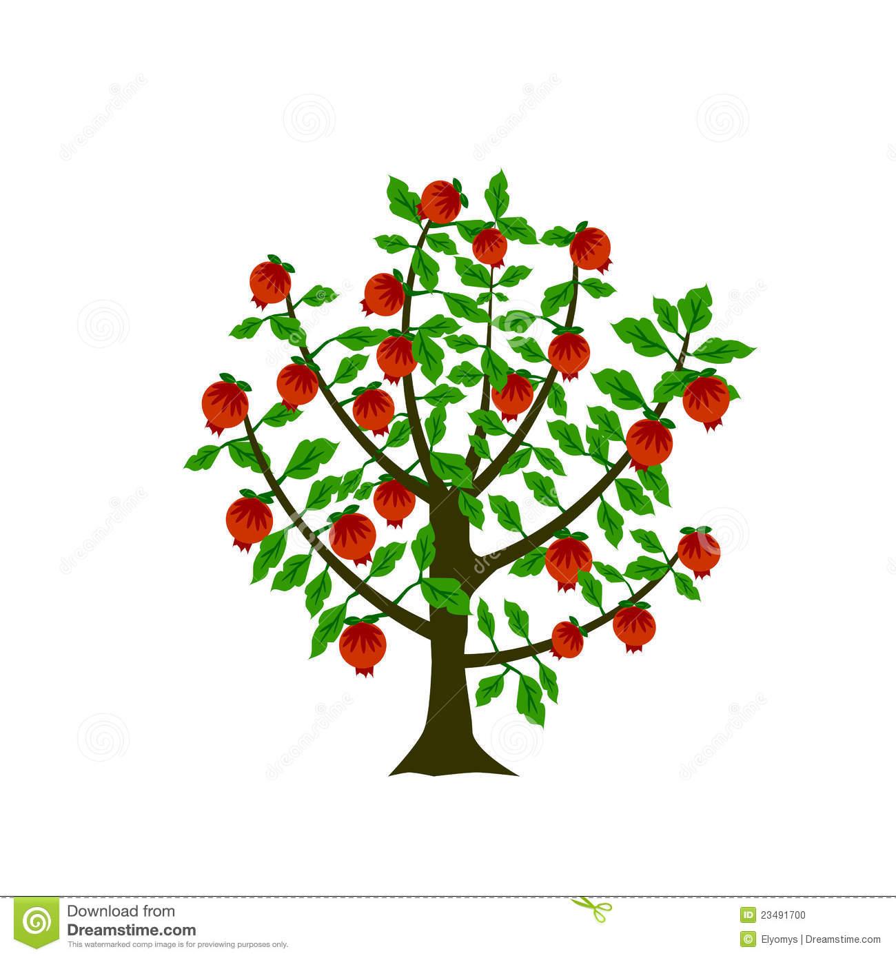 Pomegranate Tree Stock Photo.
