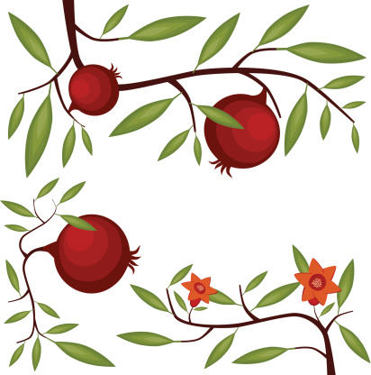 Pomegranate Clip Art, Vector Images & Illustrations.