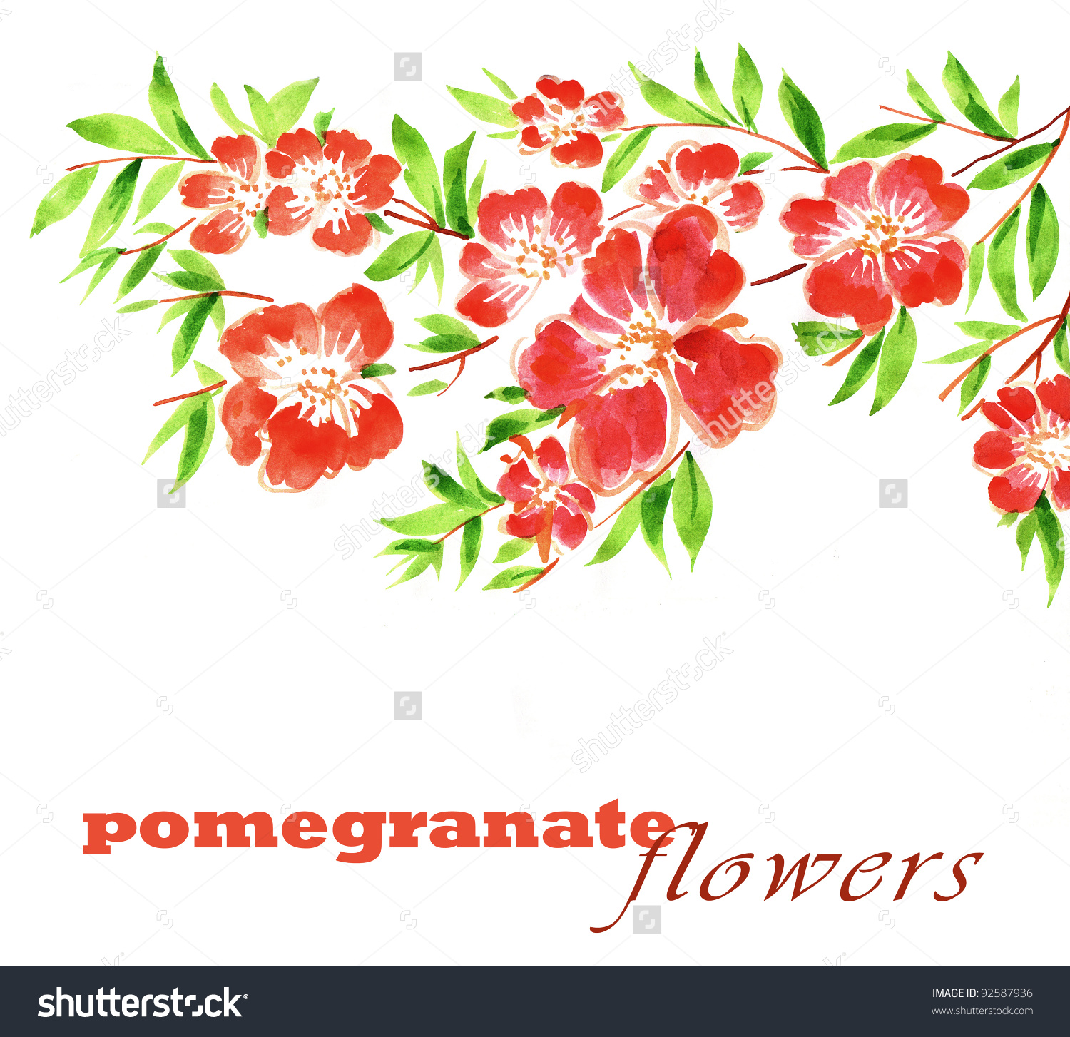 Hand Painted Illustration Pomegranate Flowers Stock Illustration.