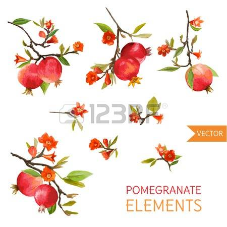 Pomegranate blossom clipart #15