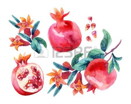 236 Pomegranate Blossom Stock Vector Illustration And Royalty Free.