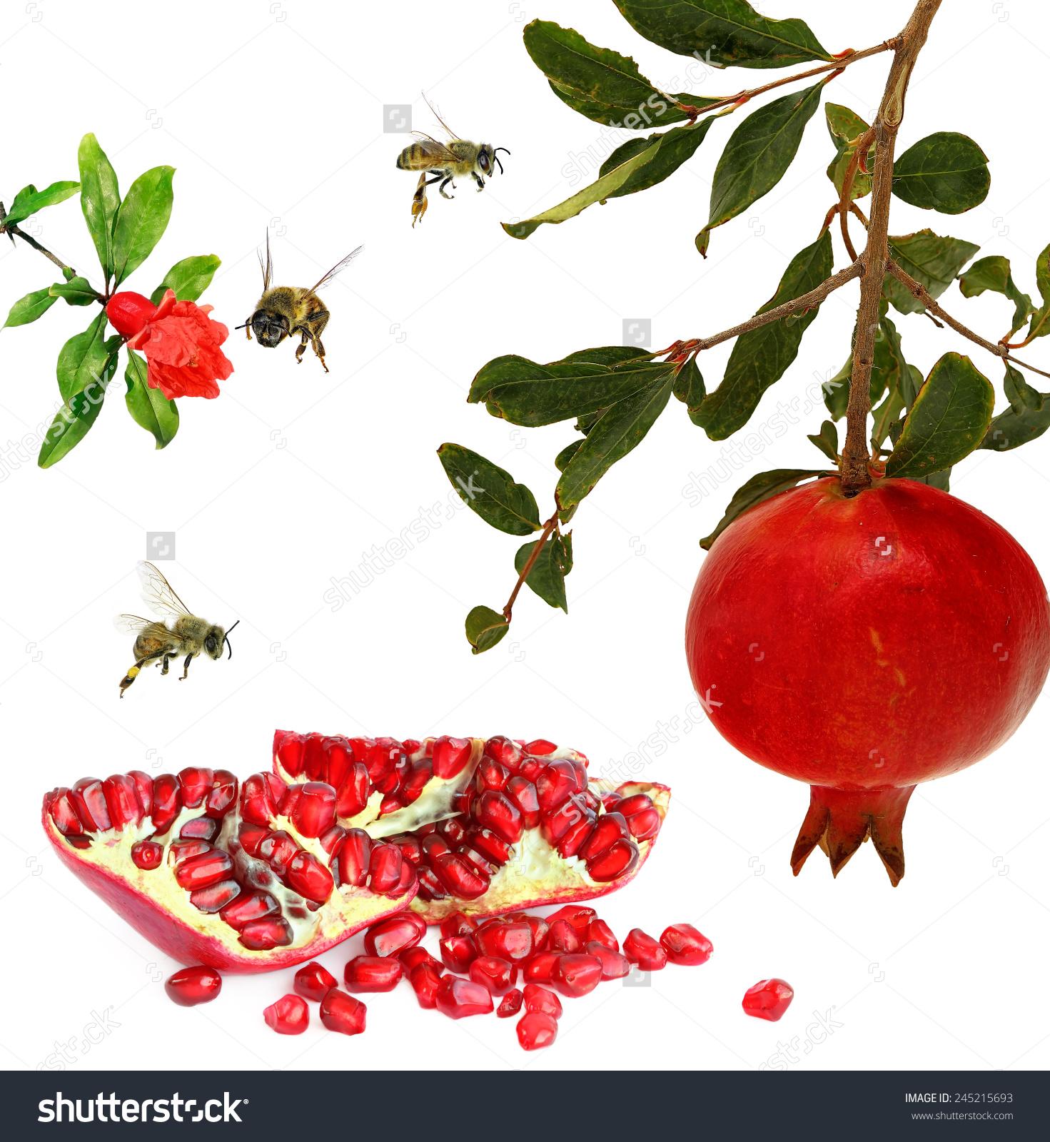 Ripe Pomegranate Fruits Pomegranate Flower Honey Stock Photo.