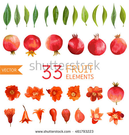 Pomegranate Flower Stock Photos, Royalty.