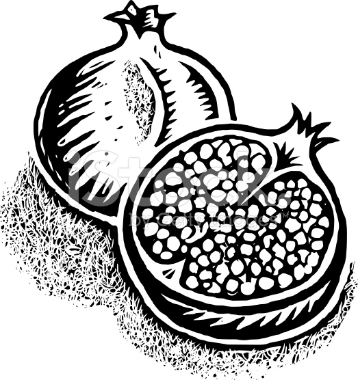 Pomegranate clipart black and white 2 » Clipart Station.