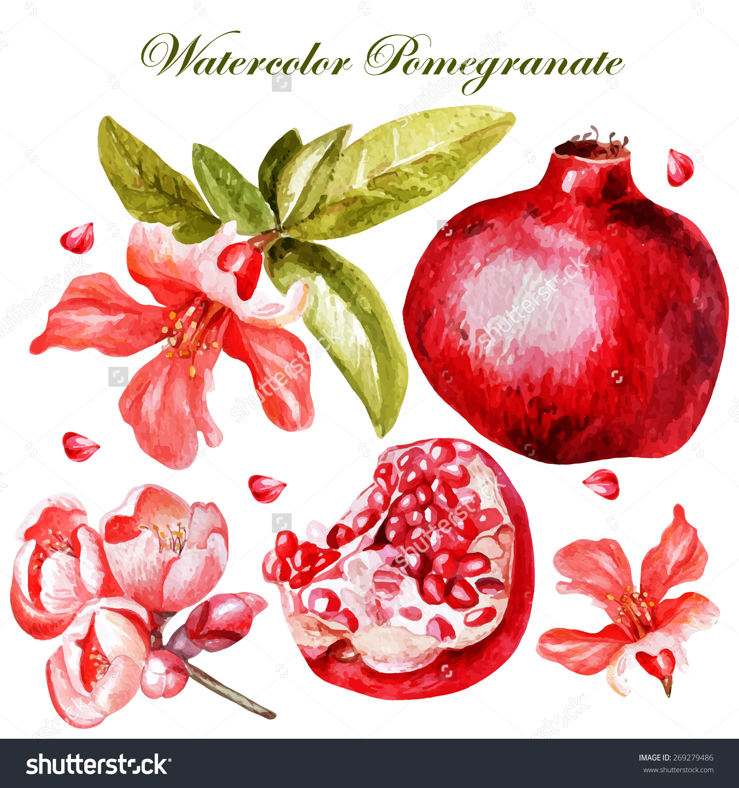 Beautiful Watercolor Set Fruits Flowers Pomegranate Stock.