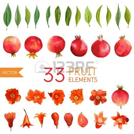 986 Pomegranate Flower Stock Illustrations, Cliparts And Royalty.