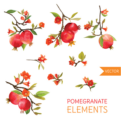 Pomegranate Flower Clip Art, Vector Images & Illustrations.