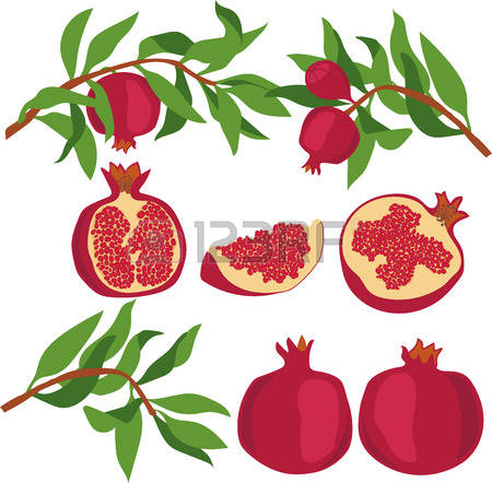 428 Cut Pomegranate Stock Vector Illustration And Royalty Free Cut.