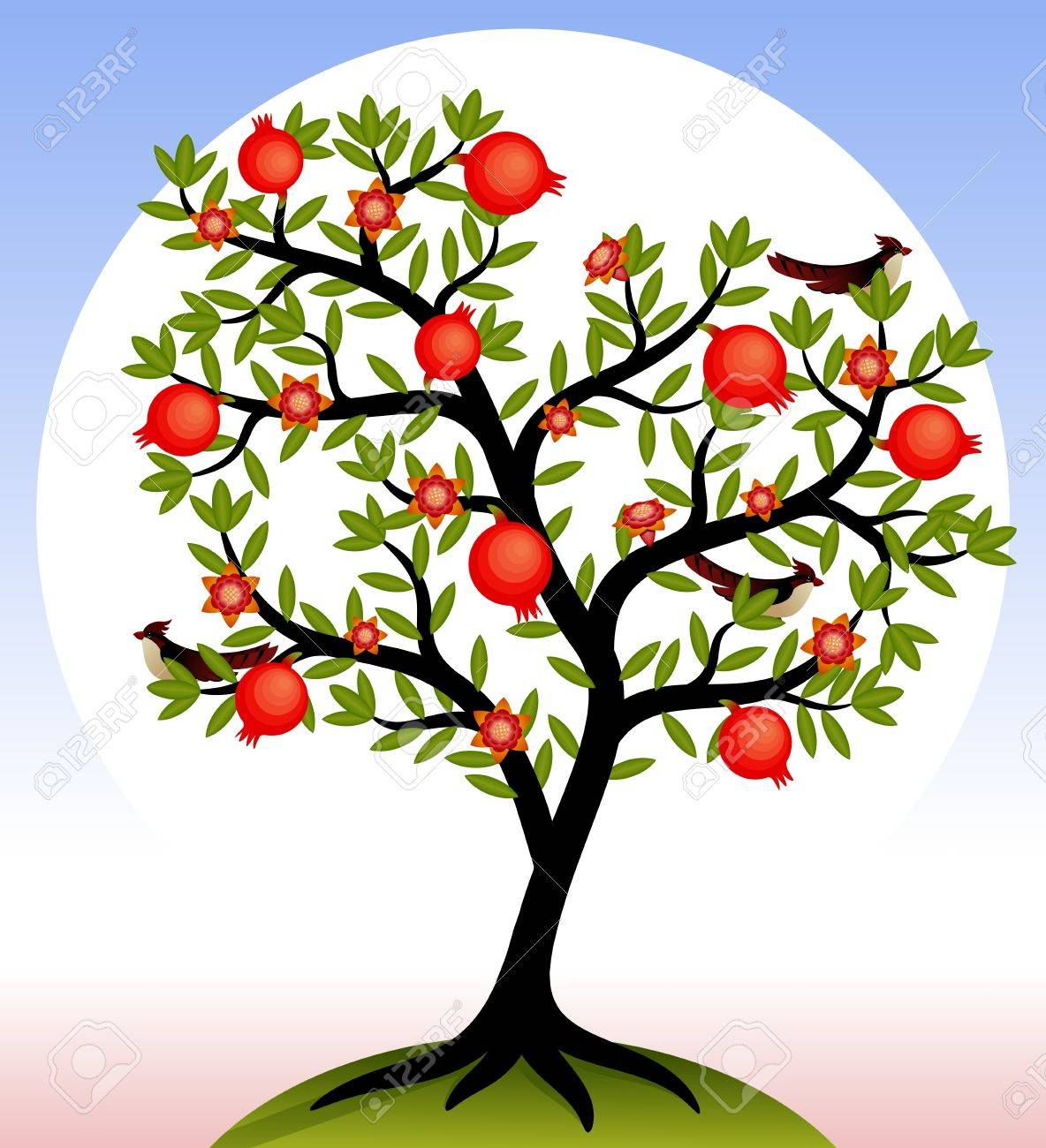 37 Pomegranate free clipart.