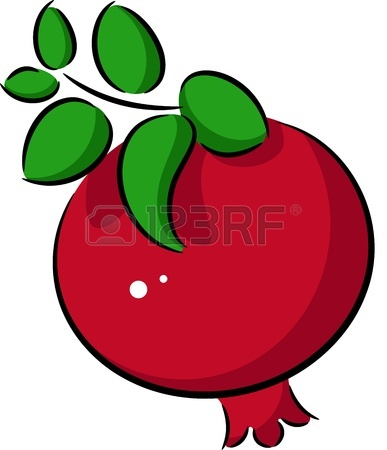 Pomegranate Clipart.